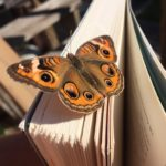 heather edwards butterfly loss coach