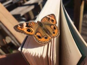 heather edwards butterfly coach